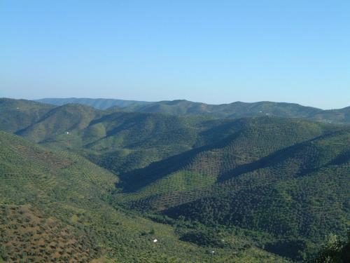 Sierra_ecológicas_aceite_olivalle_pozoblanco_los_pedroches
